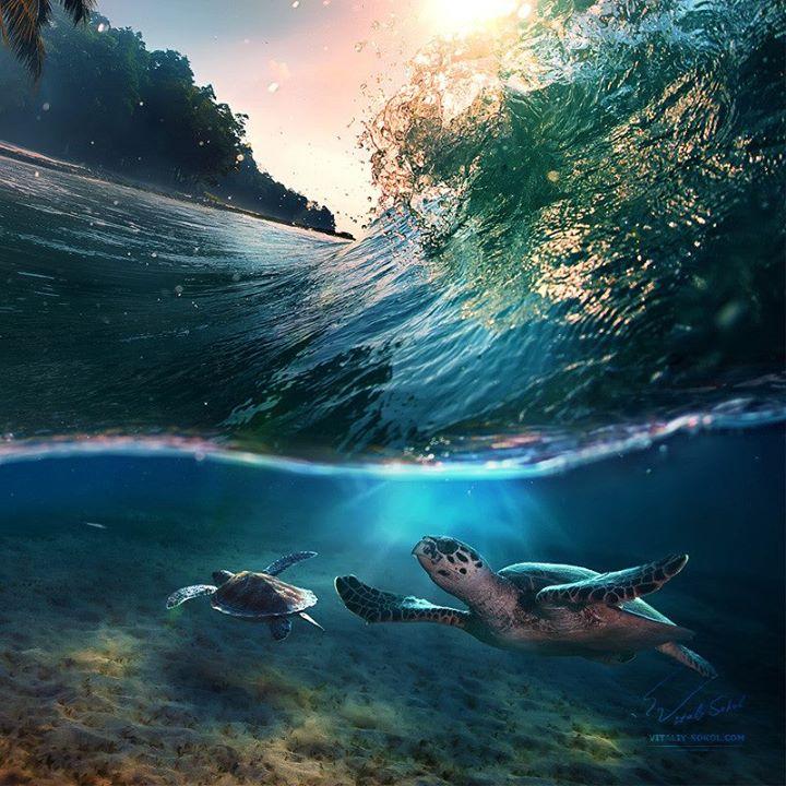 Tropik Cennet